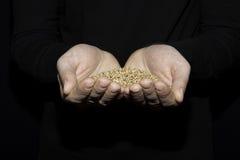 Korn des Weizens in der Hand des Mannes auf dem dunklen Hintergrund Lizenzfreie Stockbilder