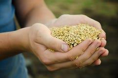 Korn för en handfull Arkivfoto