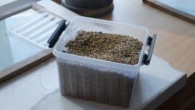 Korn för en handfull tas från en behållare för kvalitets- kontroll eller analys arkivfilmer