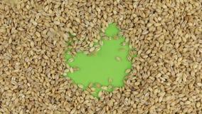 Korn för pärlemorfärg korn faller på en roterande grön skärm, fyller upp till en full bakgrund för pärlemorfärg korn arkivfilmer