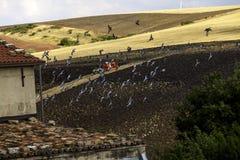 Korn-Felder mit LKW und Menge von Vögeln im Flug Lizenzfreies Stockfoto