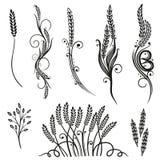 Korn havre, designbeståndsdelar Arkivbild