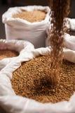 Korn i stora påsar bryggeriet Arkivfoto