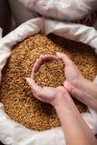 Korn i stora påsar bryggeriet Arkivbilder