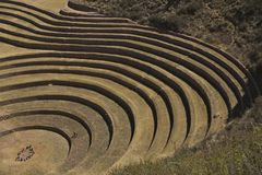 Korn kreist Peru ein Stockbilder