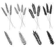 Korn, Mais, Weizen vektor abbildung