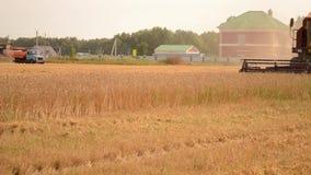 Korn och partiklar av vete som omkring exploderar under skörd arkivfilmer