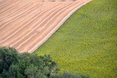 Korn- och solrosagricolture Arkivfoto
