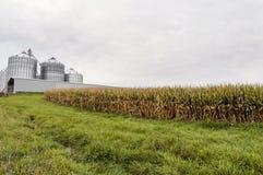 Kornbehälter und Feld von Mais stockfotografie