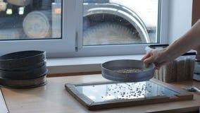 Kornen sållas till och med en handsikt eller ströare för analys eller kvalitets- kontroll lager videofilmer