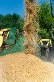 Kornerntemaschinemähdrescher, der Korn entlädt Stockfotografie