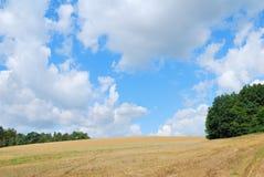 Kornfält för sen sommar efter skörd Arkivfoton