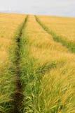Kornfält i Cotswolds royaltyfri foto