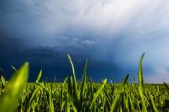 Kornfält och himmel royaltyfria bilder