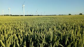 Kornfält, vindlantgård royaltyfri fotografi