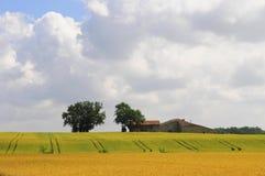 Kornfeld in Frankreich, dordogne lizenzfreie stockbilder