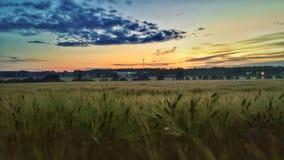 Kornfeld mit Sonnenuntergang Lizenzfreie Stockfotos