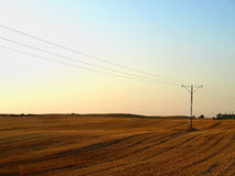 Kornfeld am Sonnenuntergang Lizenzfreies Stockfoto