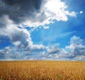 Kornfeld und schöner Himmel Stockfotografie