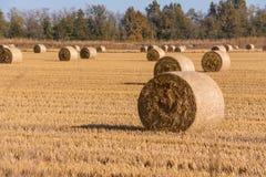 Kornfelder im Spätsommer, nachdem dem Ernten Stockbild