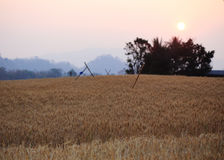 Kornfält och solnedgången av den lantliga platsen Arkivbild