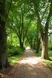 Kornik arboretum - Poland. Poland - arboretum in Kornik. Largest and oldest arboretum garden in Poland. Greater Poland province (Wielkopolska Royalty Free Stock Photography