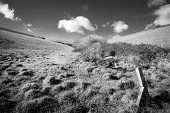 Kornische Landschaft im Sommer stockbilder