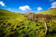 Kornische Landschaft im Sommer lizenzfreies stockfoto