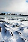 Kornisches Feld Snowy Stockfotos