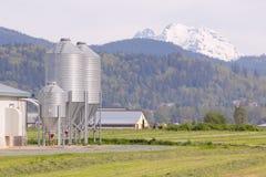 Kornmatning för boskap royaltyfri bild