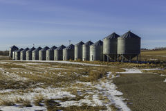 Kornsilor i Alberta Arkivfoto