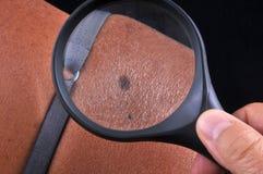 Kornskönhet undersökte med förstoringsglaset royaltyfria bilder
