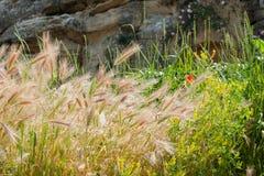 Kornskördar och blommor Royaltyfri Bild