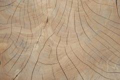 Kornträd Royaltyfria Bilder