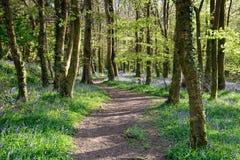 Kornwalijski las Zdjęcie Royalty Free