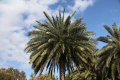 Korona drzewa Zdjęcia Royalty Free