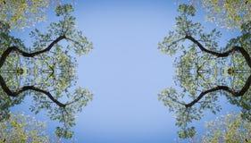 Korona drzewa przeciw niebu fotografia royalty free