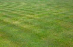 Korona rzuca kulą zielonej trawy gazon Obrazy Stock