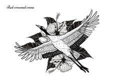 Koronujący żuraw z poślubnika tatuażem rysuje ręcznie royalty ilustracja