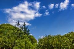 Korony drzewo z zielonymi liśćmi przeciw niebu, fotografia royalty free