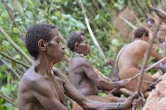 Korowai das mulheres do Papuan que abre a casca e que corta uma palmeira do sagu Imagem de Stock