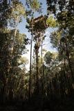 Korowai träd Hous arkivfoto