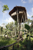 Korowai Tree House Stock Photography