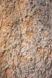Korowata drewniana tekstura Obrazy Stock