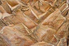korowata palma Zdjęcia Stock