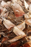korowata palmowa tekstura Zdjęcia Stock