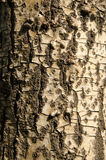 Korowata tekstura, barkentyna wzór Fotografia Royalty Free