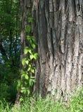 korowata zieleń opuszczać drzewa Zdjęcia Royalty Free