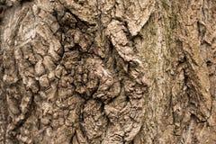 Korowatego drzewa tekstura folująca rama w naturze obrazy stock