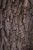 Korowatego drzewa tekstura folująca rama Obraz Stock